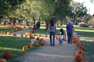 7th Annual Pumpkin Trail @ Lubbock Memorial Arboretum | Lubbock | Texas | United States