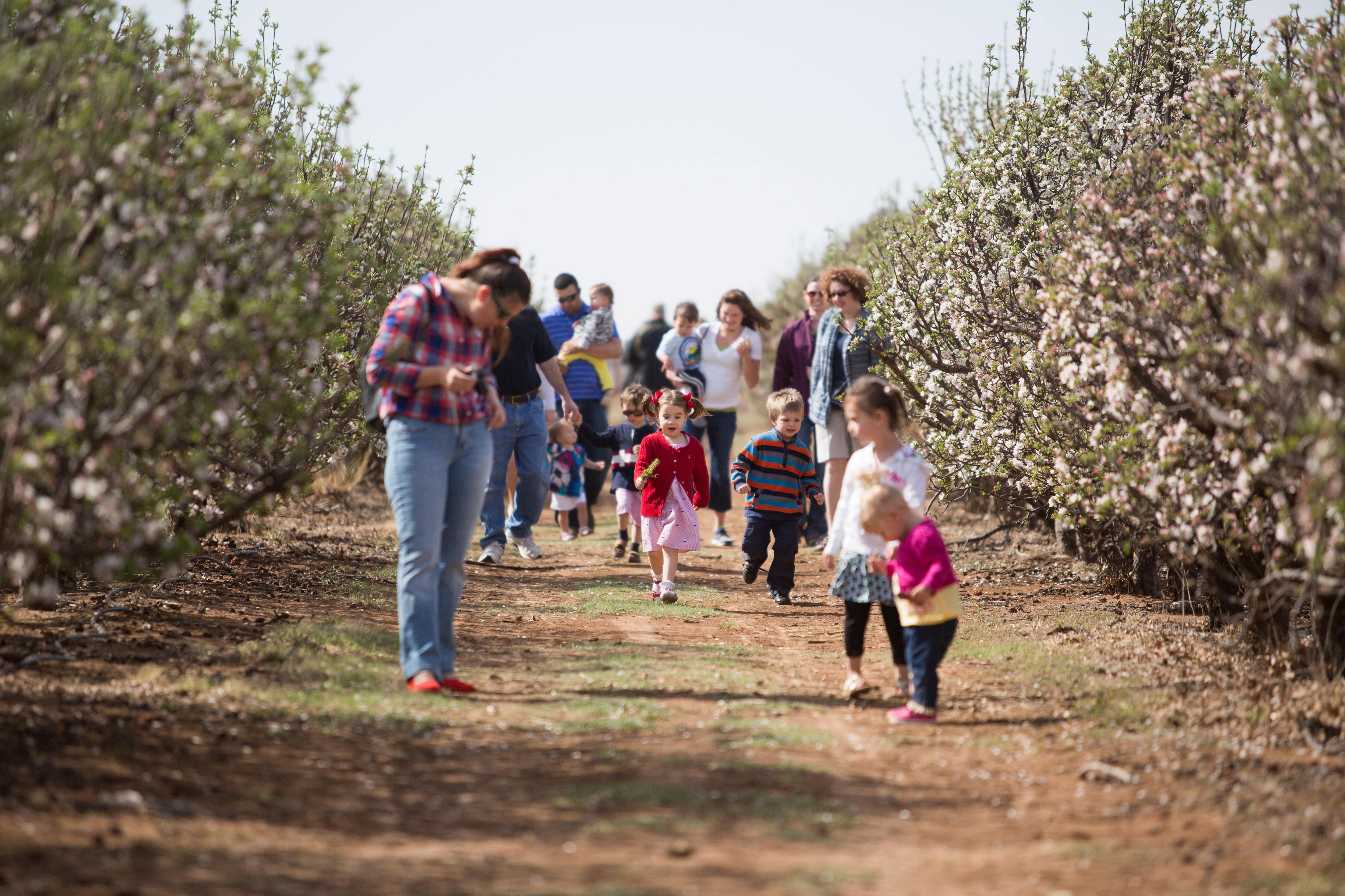 Apple-Blossom.jpg