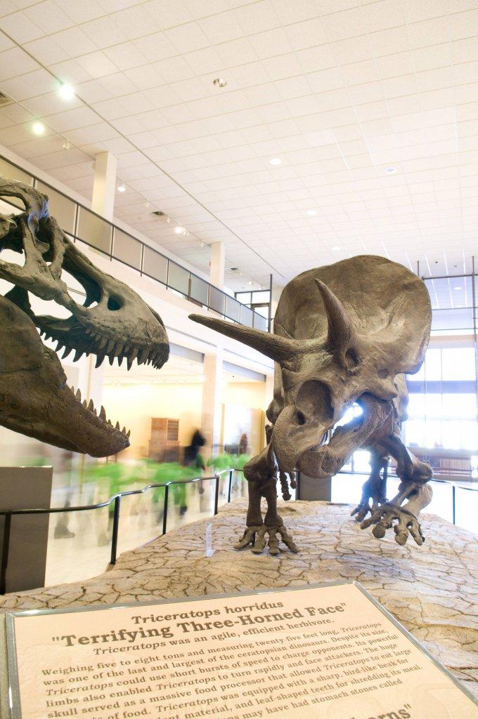 Texas-Tech-University-Museum-680x1024.jpg