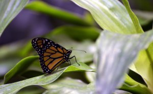 Butterflies Alive! @ Science Spectrum and OMNI Theater | Lubbock | Texas | United States