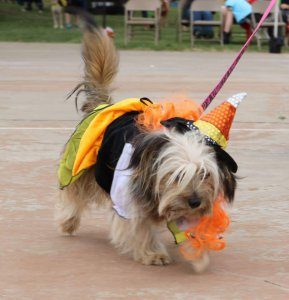 Dog Day Howl-o-ween @ Maxey Park | Lubbock | Texas | United States