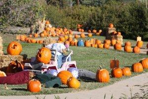 Lubbock Pumpkin Trail @ Lubbock Municipal Garden and Arts Center | | |