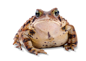Museum by Night: Why Frogs Don't Get Fat: Predators, Fear and Feeding in the Wild @ Museum of Texas Tech University | Lubbock | Texas | United States