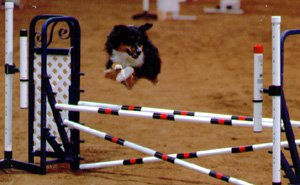 American Kennel Club Licensed 3-day Dog Agility Trials @ Texas Tech University Equestrian Center