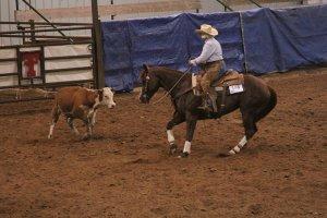 Fall Into Autumn Show @ Texas Tech Equestrian Center