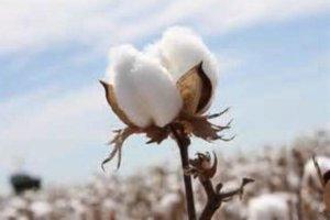 Idalou Cotton Fest @ Idalou, Texas